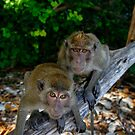 Lucky Monkeys in Paradise by Robert Mullner