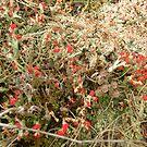 Lichen it... by aquabee