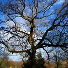 Branching Out by hootonles