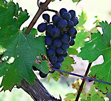 Cedar Creek Vines by Rosina  Lamberti