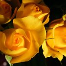 yellow rosebuds by Joyce Knorz