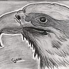 Bald Eagle by cjsheena