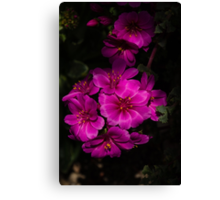 A Vivid Succulent Bouquet in Bold Pink and Fuchsia Canvas Print