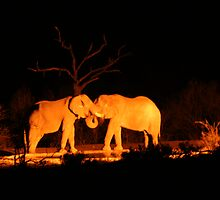 elephants at water hole by sptanner69