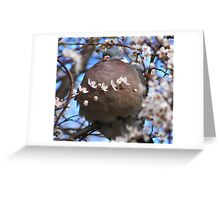 Cute puffed up wood pigeon Greeting Card