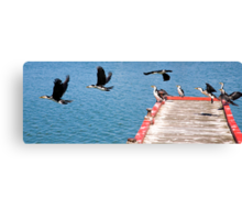 Birds of Lakes Entrance Canvas Print