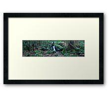 Margeurite Cascades Framed Print
