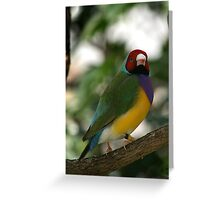 Lady Goulden Finch Greeting Card