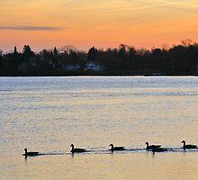 Eleven Goose Sunrise by Bill Morgenstern