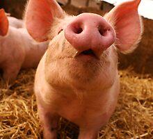 Piglet looking up by nayamina