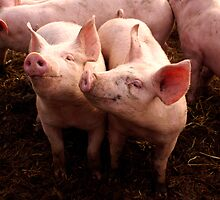 2 Little Piggy's by nayamina