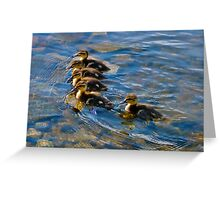 5 Young Ducklings Swimming In Clear Water Greeting Card