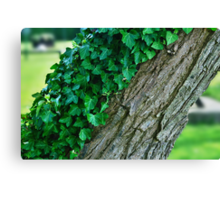 A Tree Half Covered In Ivy With Blurred Background Canvas Print