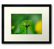 Macro - Pollen Producing Flower Head Framed Print