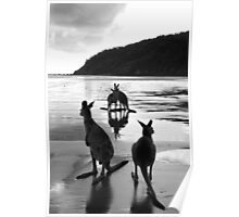 Kangaroos at Sunrise Poster