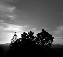 Suncomp012008 by theodoorventer by theodoorventer