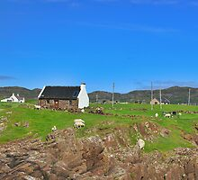Scotland - House With Sheep by Joel Kempson
