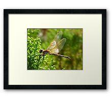 Dragon Alight Framed Print