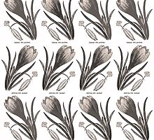Vintage Crocus Botany Drawing by ARTiculatePRINT