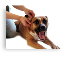 STAFFORDSHIRE TERRIER DOG EAR MASSAGE  Canvas Print