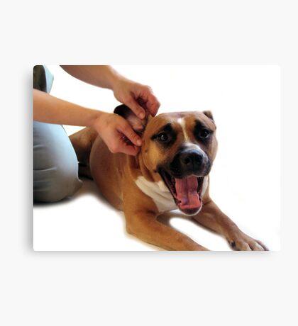 STAFFORDSHIRE TERRIER DOG EAR MASSAGE  Canvas Print