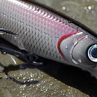 fishing plug by westie71
