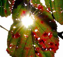 window leaf by zacco