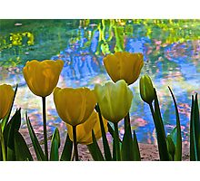 Tulips and Pond Photographic Print
