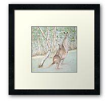 Australian Kangaroos Framed Print