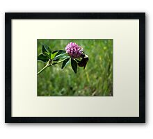 Fuzzy Bumble Framed Print