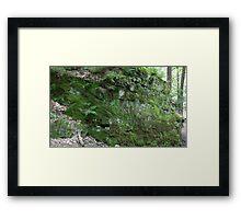HDR Composite - Ferns on Mossy Rock Framed Print