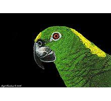 AMAZON PARROT (SCRATCHBOARD) Photographic Print