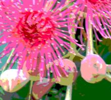 Pink flowering gum blossom Sticker