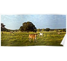 Two Cows Poster