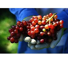 Red Grapes and the Gardener Photographic Print