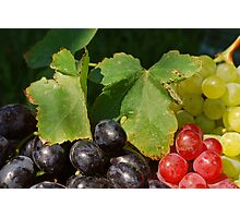 Grape Leaves Photographic Print