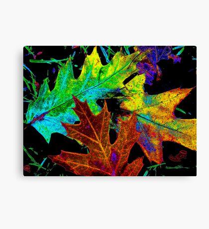 fallen leaves Canvas Print