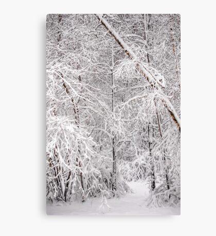 Hello Snow! Canvas Print