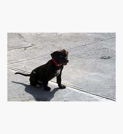 Kimba Photographic Print