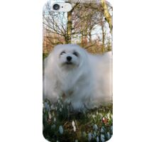 Snowdrop the Maltese -  in the Snowdrop Woods iPhone Case/Skin