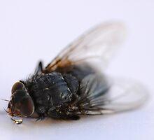 dead fly by mtths