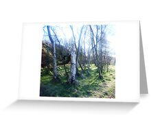 Sunlight in the trees Greeting Card