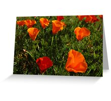 California Poppies Greeting Card