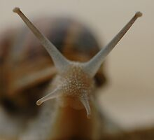 snail 1 by mtths