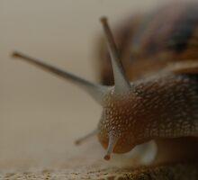 snail 2 by mtths