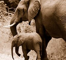 African Elephants mother and baby by Colleen  Brink