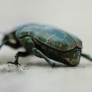 green armoured beetle by mtths