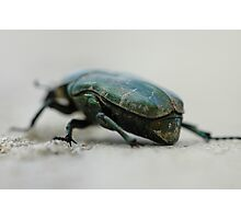 green armoured beetle Photographic Print