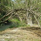 Tree Arch  by Anita Schuler