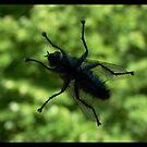 Fly by Rowan  Lewgalon